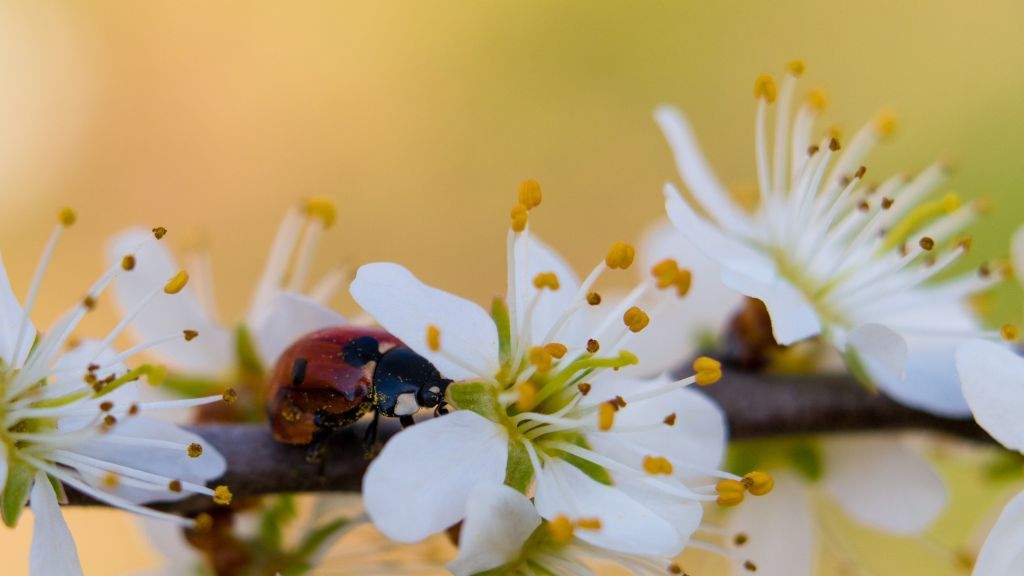 Imkerei albert wienstroer for Bienenfreundlicher garten